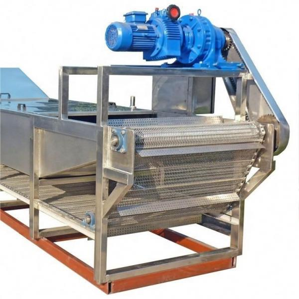 5m² Coffee Processing/Vegetable/Mango/Dried Fruit/ Freeze Dryer Machine Price